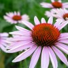 las vegas : flowers5